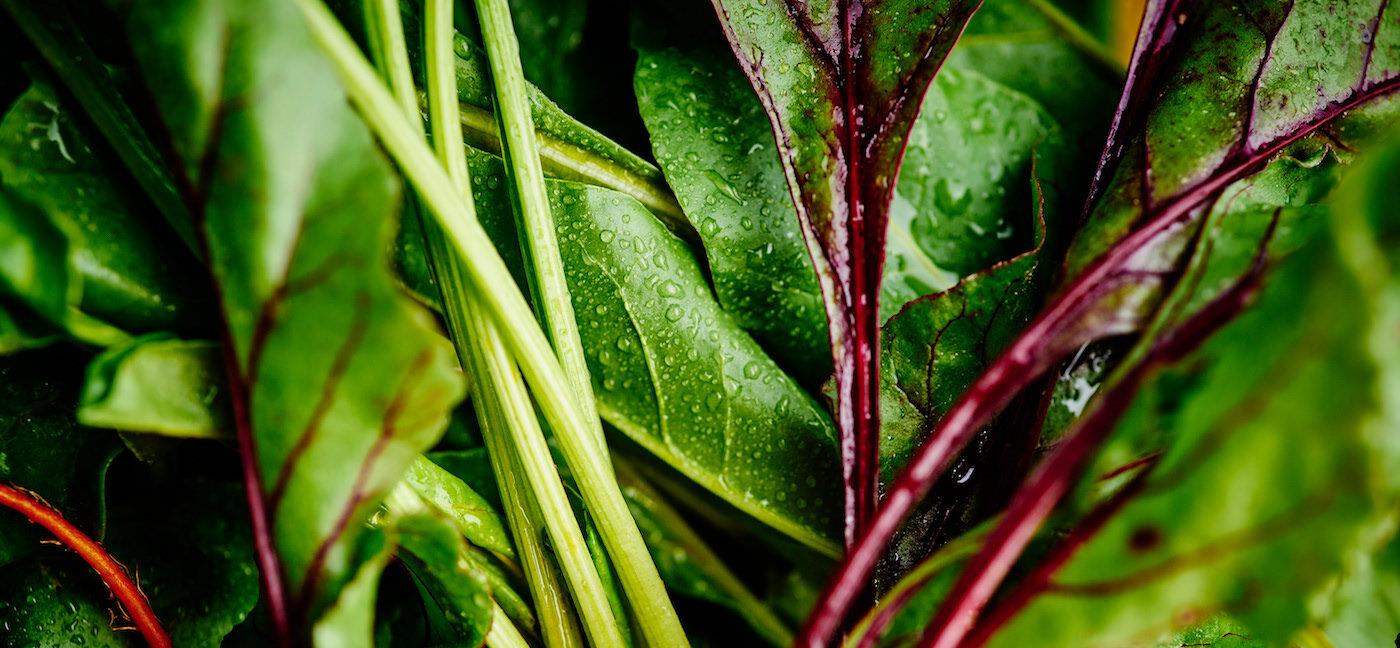 •ZBYCH• Przetwórstwo warzyw iowoców
